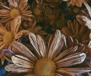 bouquet, close up, and macro image