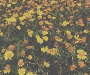 flowers, yellow, and garden image