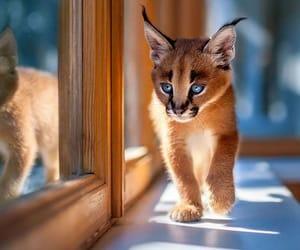animal, baby, and beautiful image
