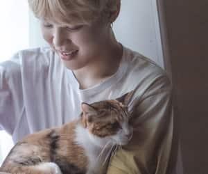 cat, bts memories 2017, and serendipity image