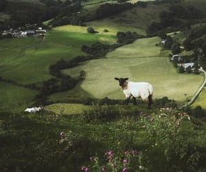 beautiful, country, and sheep image