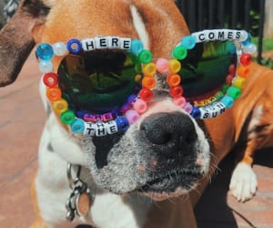 beads, dog, and shades image