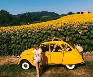 yellow, car, and flowers image