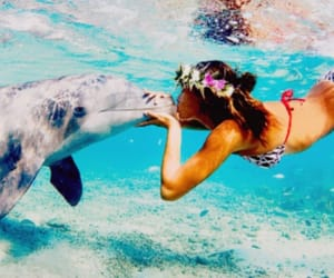 activity, beach, and dolphin image