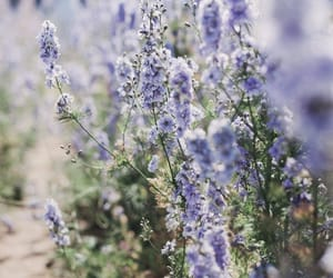 lavender, lilac, and nature image