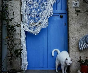 blue, lace, and cat image