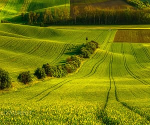 countryside, farmland, and field image