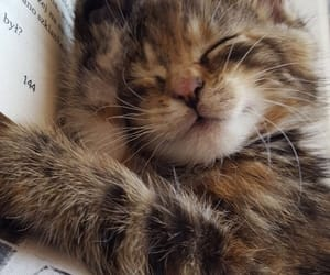 cat, animal, and book image