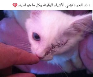 arabic, cat, and quotes image