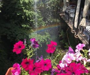 flowers, lebanon, and rainbow image