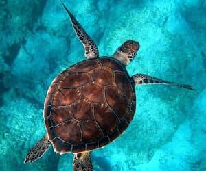 sea, turtle, and animal image