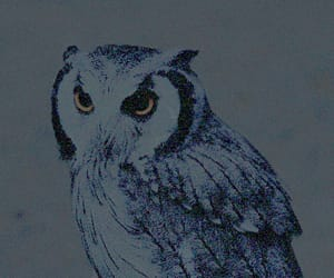 beautiful, theme, and scops owl image
