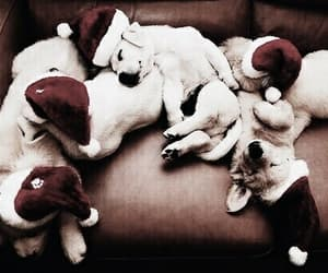 adorable, xmas, and puppes image