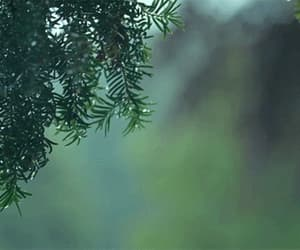 forest, gif, and green image