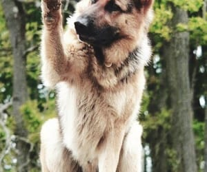 adorable, dog, and forest image