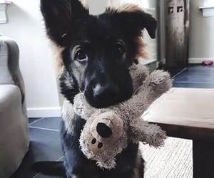 dog, german shepherd, and puppy image