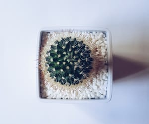 cactus, design, and house image