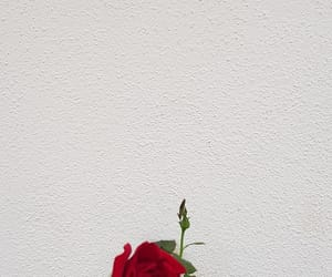 flower, quote, and red image