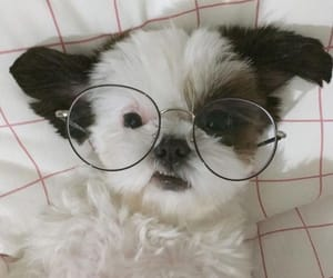 aesthetic, dog, and glasses image