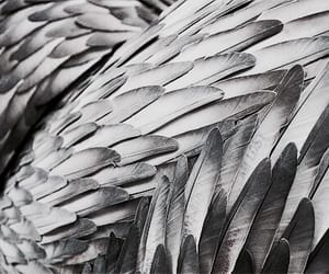 theme, feather, and aesthetic image