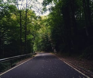 arbres, forest, and road image