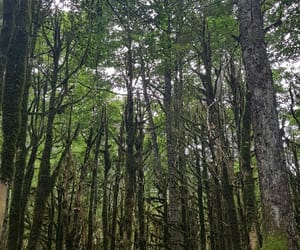 forest, quiet, and green image