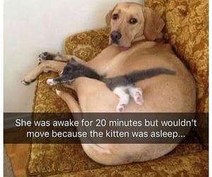animals, labrador, and pets image