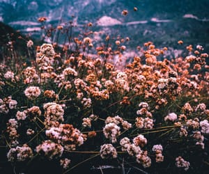 aesthetic, floral, and landscape image
