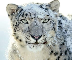 animal, snow, and photography image