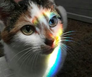 book, cat, and rainbow image