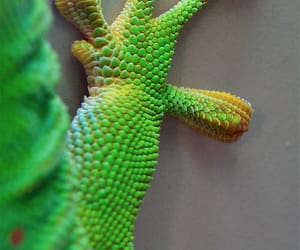 colorful, gecko, and green image