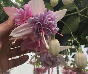 art, beautifull, and flower image
