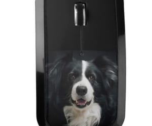 border collie and border collie mouse image