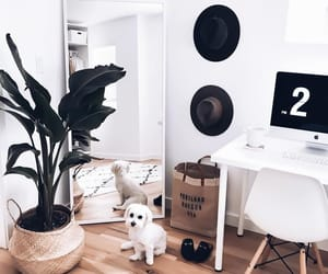 aesthetic, decor, and dogs image