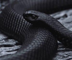 snake, black, and animal image