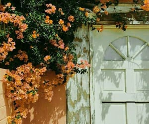 flowers, pink, and door image