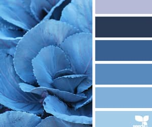 aesthetics, blue, and cabbage image