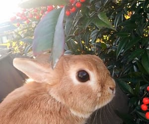 bunny, aesthetic, and animals image
