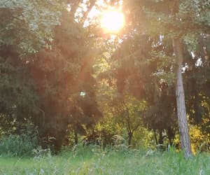 light, summer, and sun image