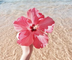 beach, beauty, and pink image