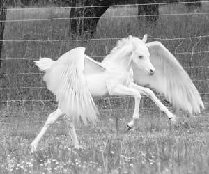 tumblr, unicorn, and pale image
