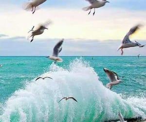 beautiful, landscape, and birds image