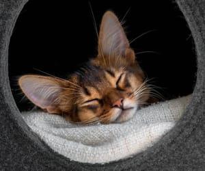 animal, kitten, and sleeping image