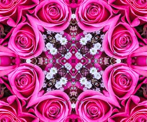 floral, hot pink, and roses image