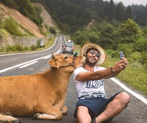 animal, selfie, and cow image