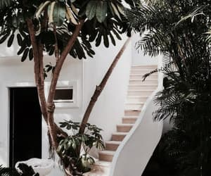 house, home, and plants image
