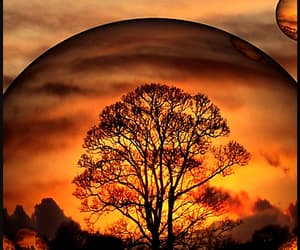 bubbles, sunset, and tree image