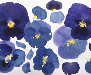 flowers, blue, and art image