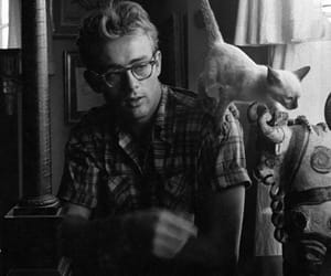james dean, cat, and boy image