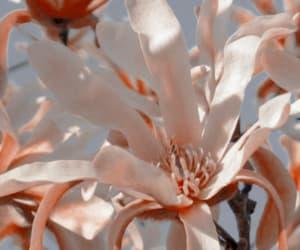 edit, flower, and header image